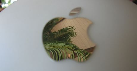 Cycad Apple by Josh Work